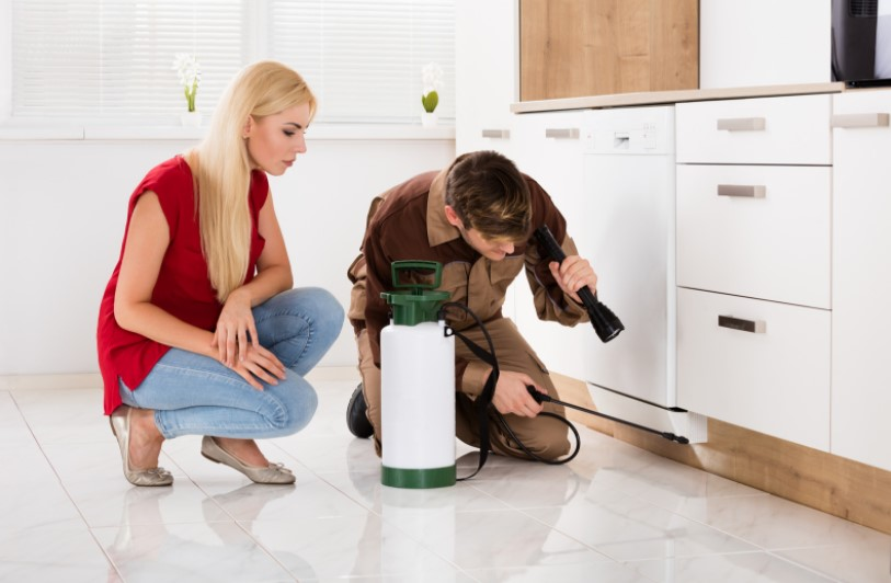 Qualities of the Best Pest Exterminators